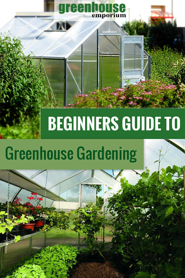 Greenhouse from outside and inside with the text: Beginners guide to greenhouse gardening