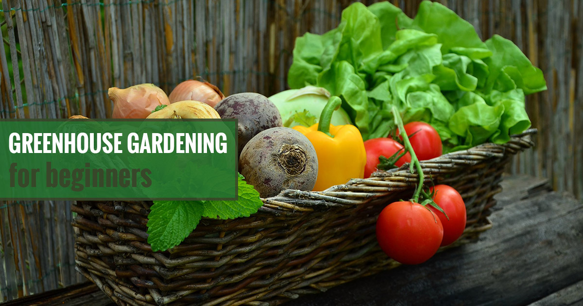 A basket full of vegetables and the text: Greenhouse Gardening For Beginners - Where do I start?