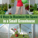 Interiors of greenhouses with shelves and the text: 6 Ways to Maximize the Space in a Small Greenhouse