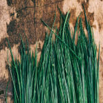 Chives on a wooden surface