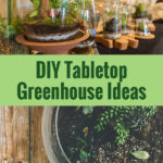 Mini greenhouses made from fish bowls with the text: DIY Tabletop Greenhouse Ideas