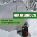 Gothic arch shaped greenhouse with loads of snow around and the text: Riga Greenhouse - Is it the best winter greenhouse?