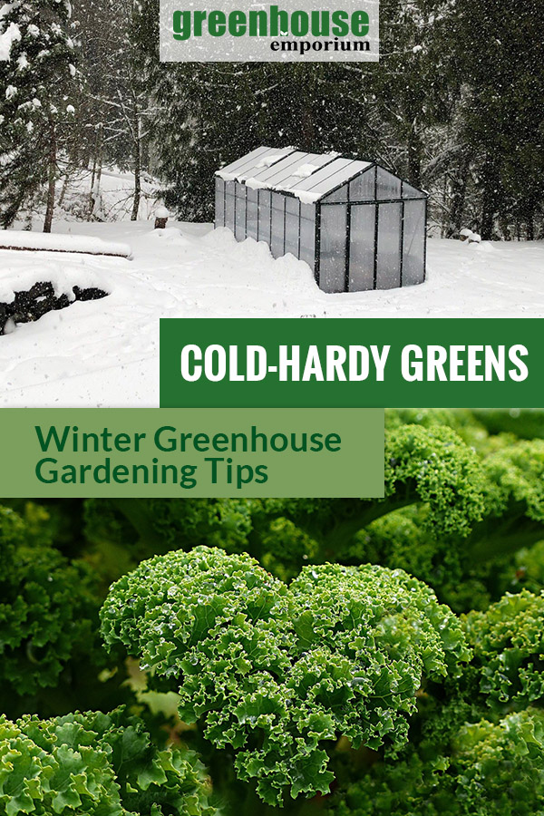 A greenhouse in snow and green kale with the text: Cold-Hardy Greens - Winter Greenhouse Tips