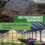 Gothic arch greenhouse at the top and interior of a polycarbonate greenhouse at the bottom with the text in the middle: Best Polycarbonate Greenhouses -You should consider buying!