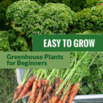 Above is a picture of fresh kale vegetables. Below are newly harvested carrots with the text in the middle: Easy to Grow Greenhouse Plants for Beginners.