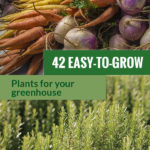 Root vegetables on top and rosemary at the bottom with the text: 42 Easy-to-grow Plants for your Greenhouse