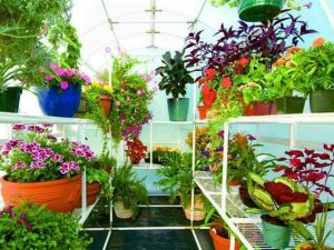 Bench Racks for Solexx Greenhouses with plants
