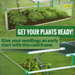 Open Cold Frame using the automatic opener and two height adjusters: BioStar 1500 - Spacious Cold Frame with 8mm Polycarbonate