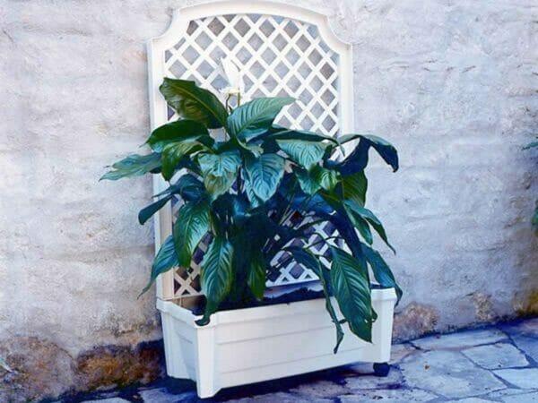 Calypso Planter White