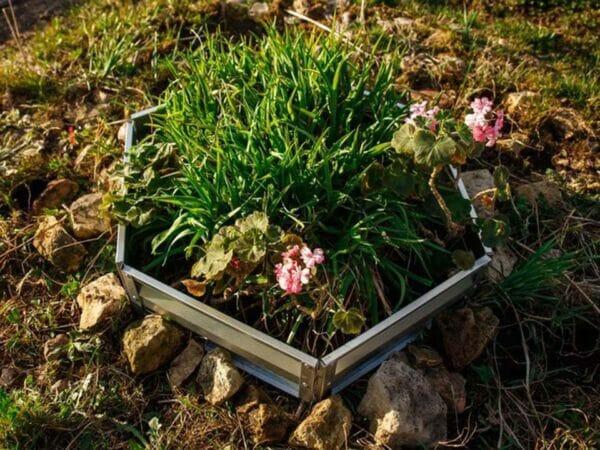 Delta Park Raised Garden Kit with plants