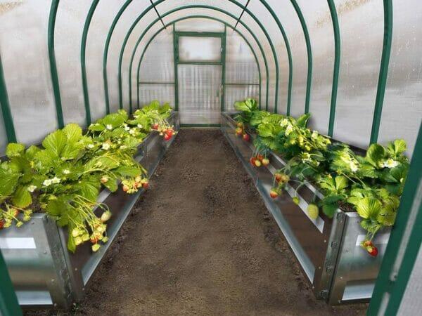 Delta Park GU in Greenhouse