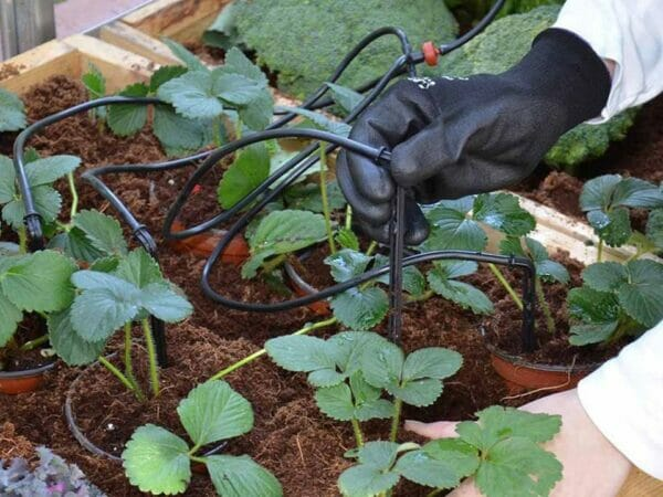 Close up of the Drip Irrigation Kit for Hobby Greenhouse kits