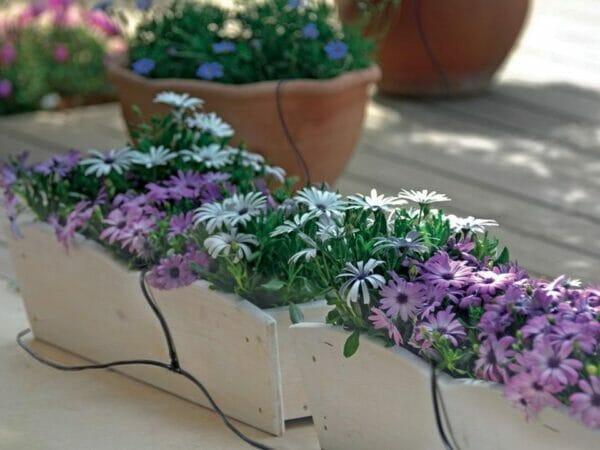Genesis Drip Irrigation System with beautiful flowers in side view