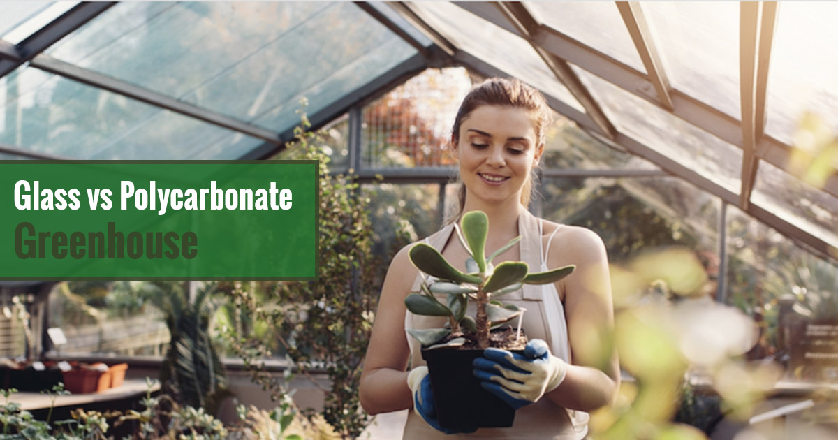 Woman in a greenhouse holding a plant with the text: Glass vs Polycarbonate Greenhouse