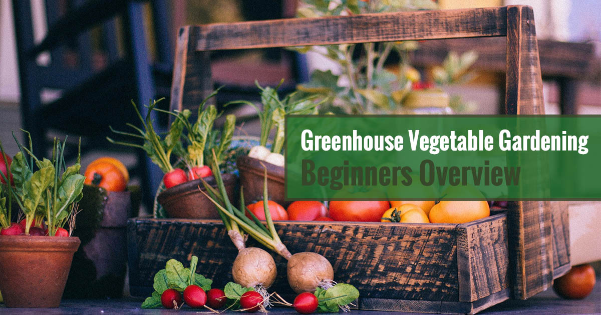 Greenhouse Vegetable Gardening - Beginners Overview