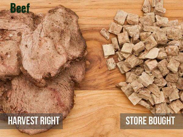 Comparison of Harvest Right Frozen Dried Beef and Store bought fresh beef