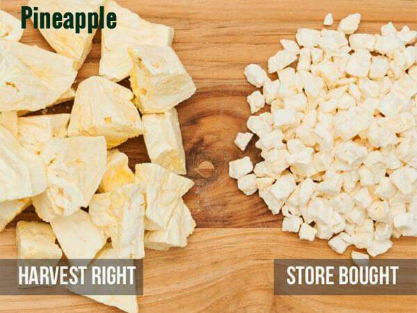 Comparison of Harvest Right frozen dried pineapple chunks and store bought pineapple chunks