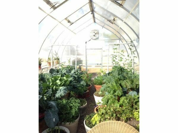 Hoklartherm Riga XL 9 Greenhouse 14x30 interior view showing plants inside