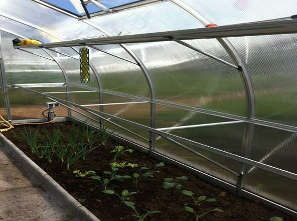 Hoklartherm Riga XL 9 Greenhouse 14x30 interior side view with seedlings on the ground