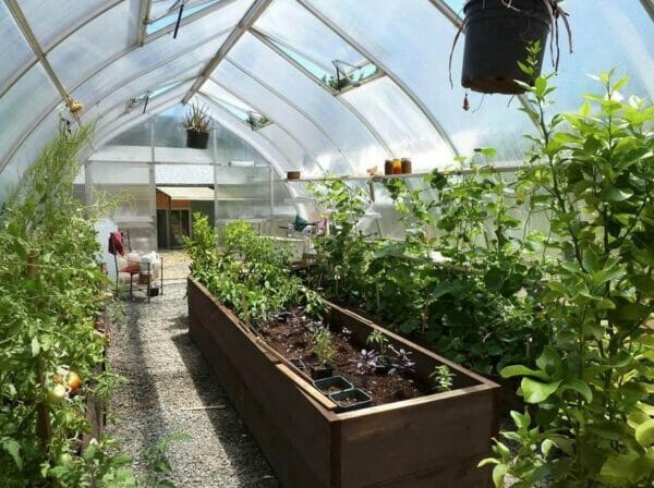 Hoklartherm Riga XL 9 Greenhouse 14x30 interior view showing plants