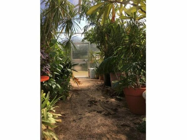 Hoklartherm Riga XL 9 Greenhouse 14x30 interior view showing plants and the door