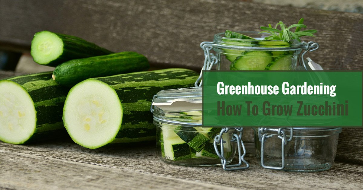 Sliced zucchinis and smaller bits in jars with the text Greenhouse Gardening – How To Grow Zucchini?