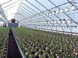 Palring 146 UV, AF & IR Shiny Woven Greenhouse Cover - Greenhouse Emporium