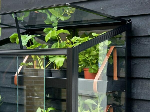 Close up View of Juliana City Greenhouse with plants against a wall and open roof windows
