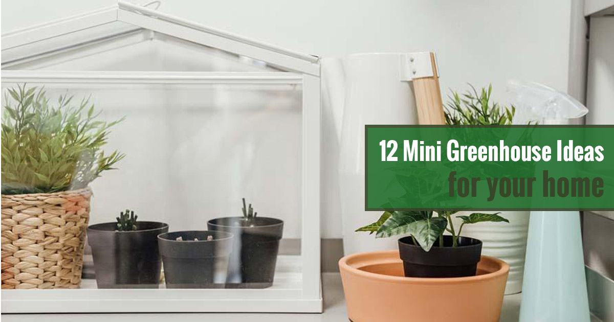 12 Mini Greenhouse Ideas for Your Home