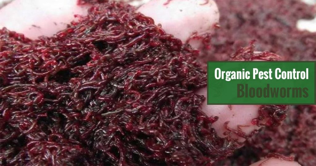 Organic Pest Control Bloodworms
