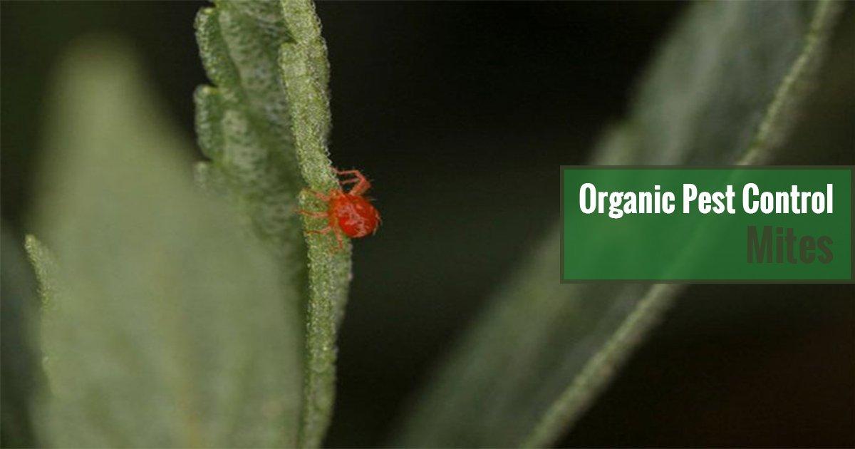 Organic Pest Control Mites