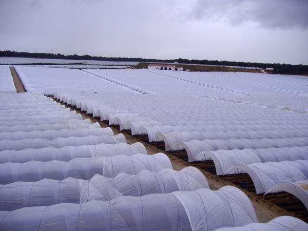 Palring 175 UV, AF & IR Shiny Woven Greenhouse Cover - Greenhouse Emporium