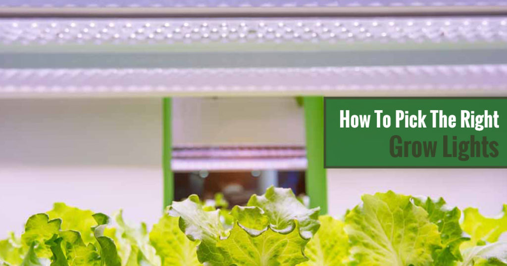 How to Pick the Right Grow Lights for Your Greenhouse