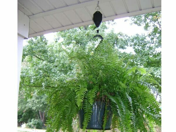 Hanging plant using plant caddie hook
