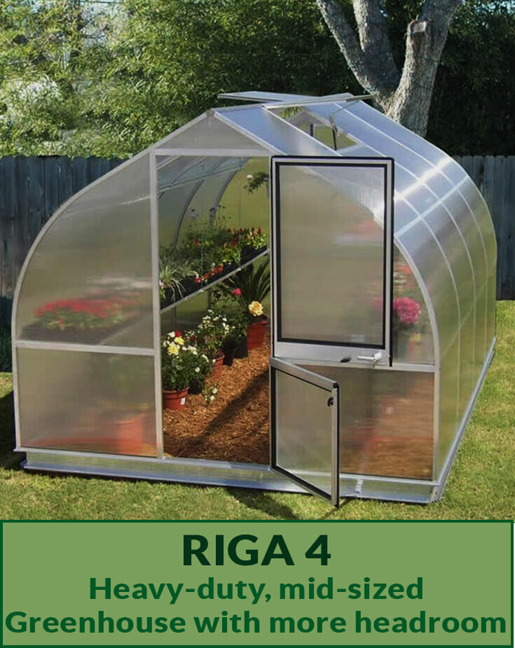 Hoklartherm Riga 4 Greenhouse exterior view with open doors showing plants inside with the Text Riga 4 Heavy-duty, mid-sized Greenhouse with more headroom