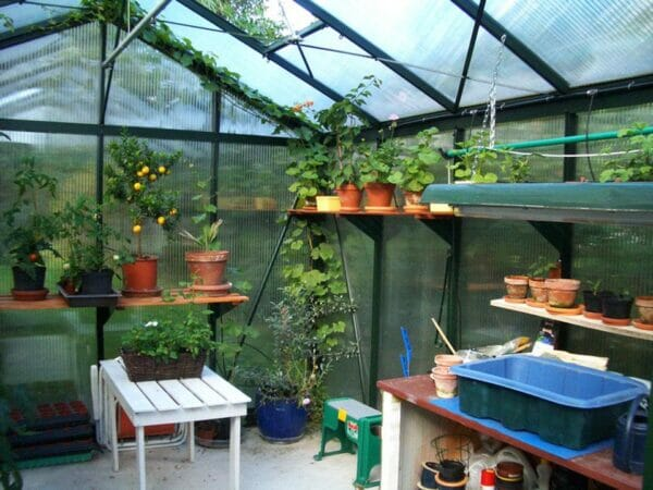 Inside view of the Janssens Royal Victorian VI34 Greenhouse 10ft x 15ft