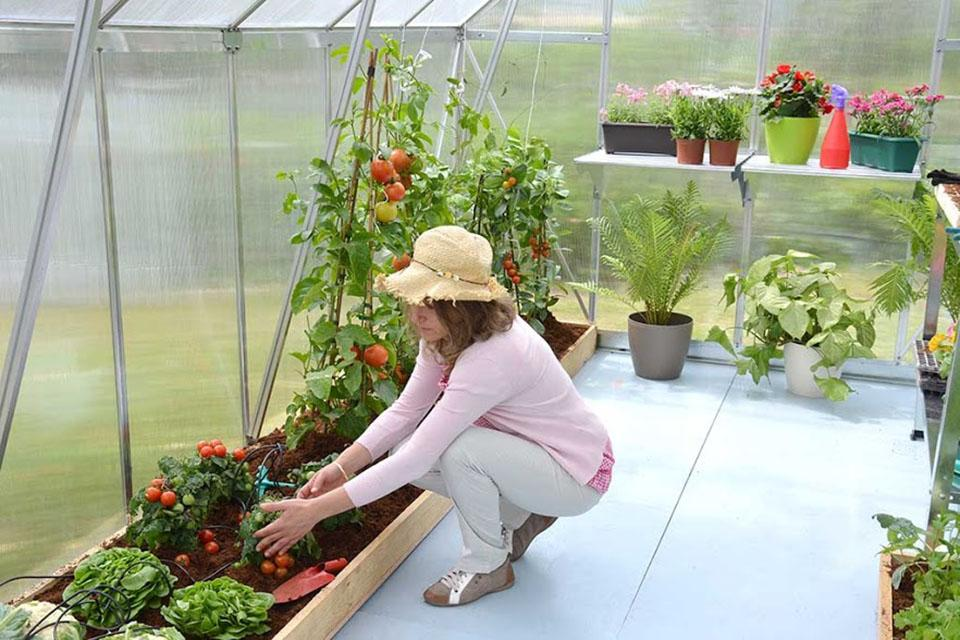 Growing your own plants in a greenhouse has many benefits