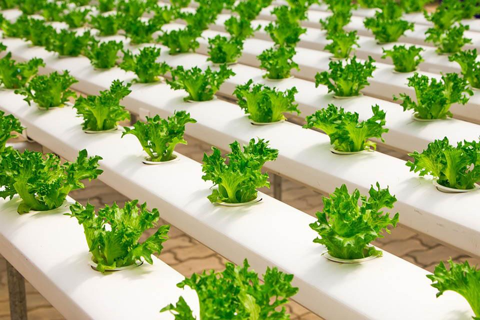 Hydroponic systems for greenhouses
