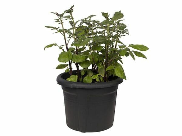 ELHO Potato Pot Planter with grown leaves