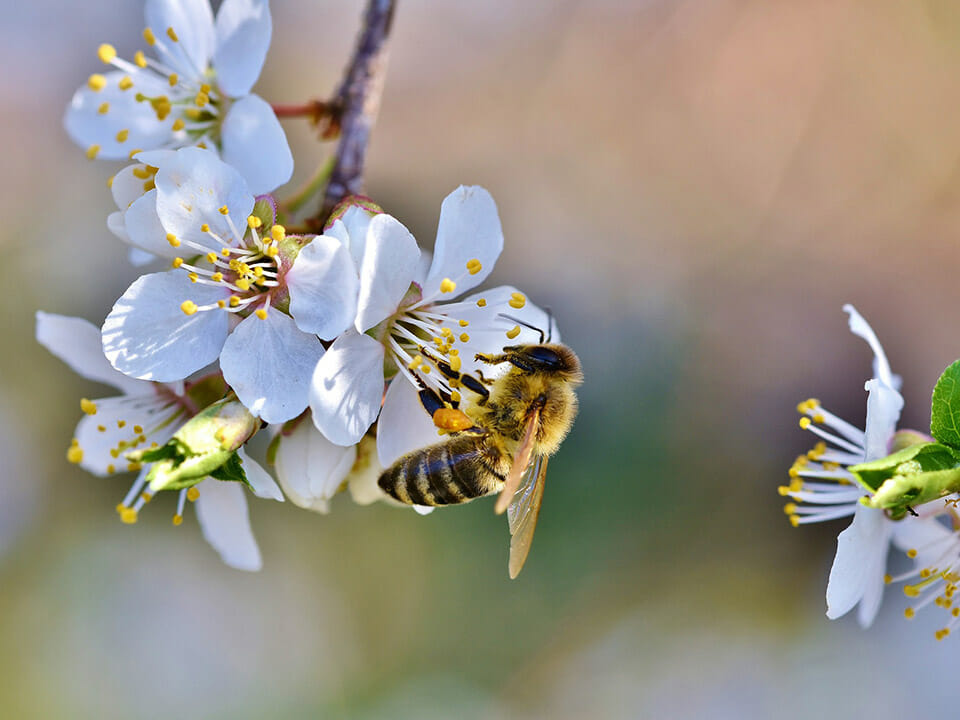 Bee pollinating a flower on a tree