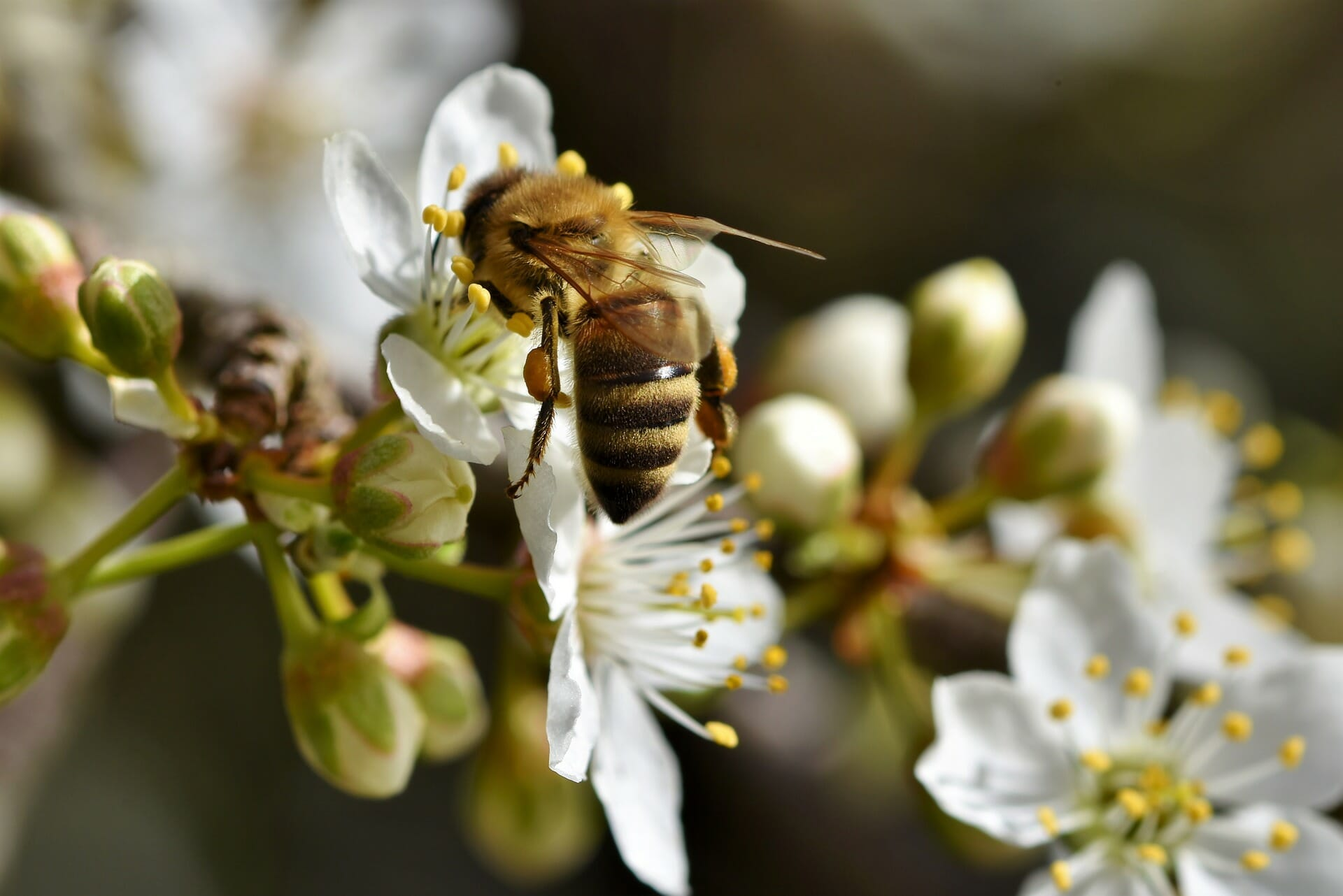Bee pollinating a flower in nature