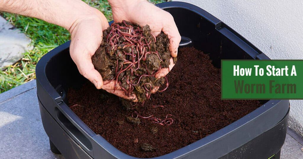Hands with worms and soil over a worm farm with soil and an overlay text: How to start a worm farm