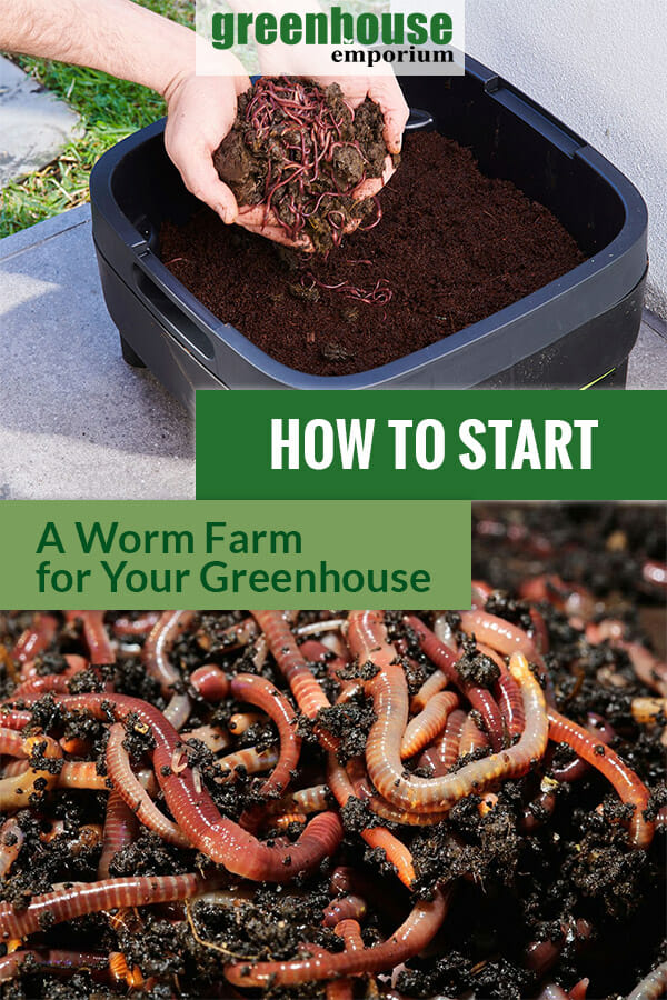 MAZE worm farm and red rigger worms with the text: How to Start a worm farm for your greenhouse