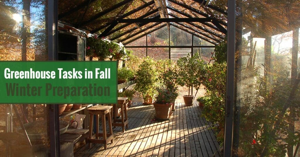 Interior view of greenhouse with fall leaves on top and the text overlay: Greenhouse Tasks in Fall - Winter Preparation