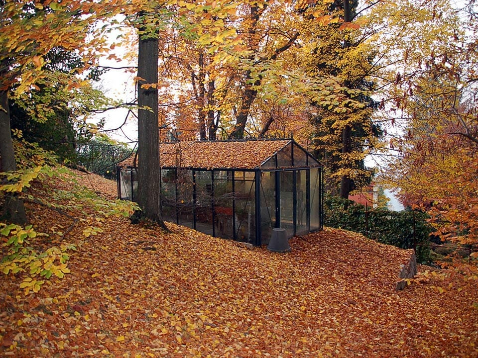 Glass greenhouse in fall with foliage on top