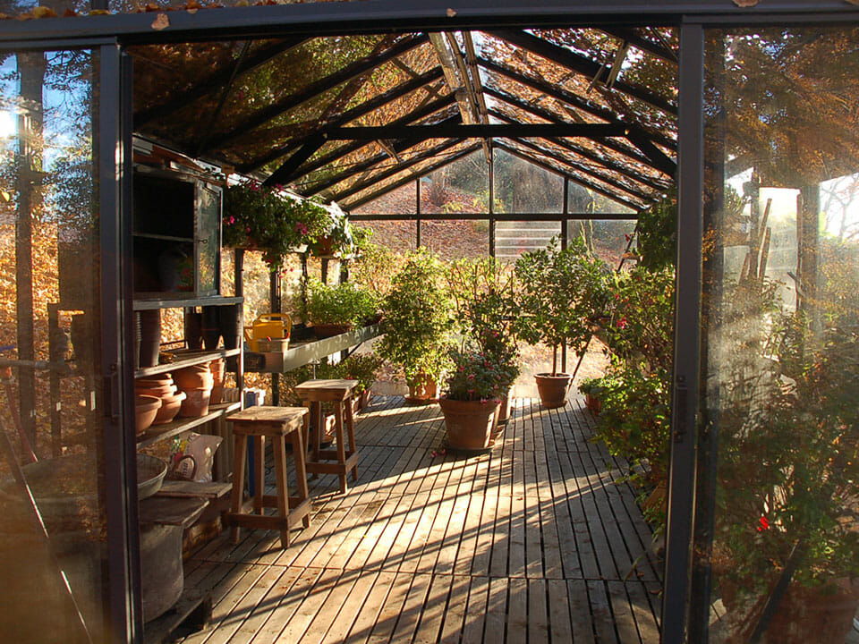 View inside a glass greenhouse that is covered with colorful fall foliage and has a few plants inside