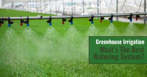 Irrigation system activated with blue and red spray nozzles dispensing water over grass, text in green box says Greenhouse Irrigation - What's The Best Watering System?