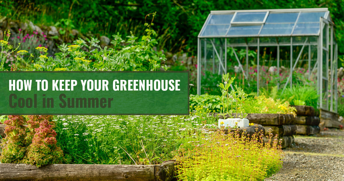 Greenhouse and plants with text: How to Keep Your Greenhouse Cool in Summer