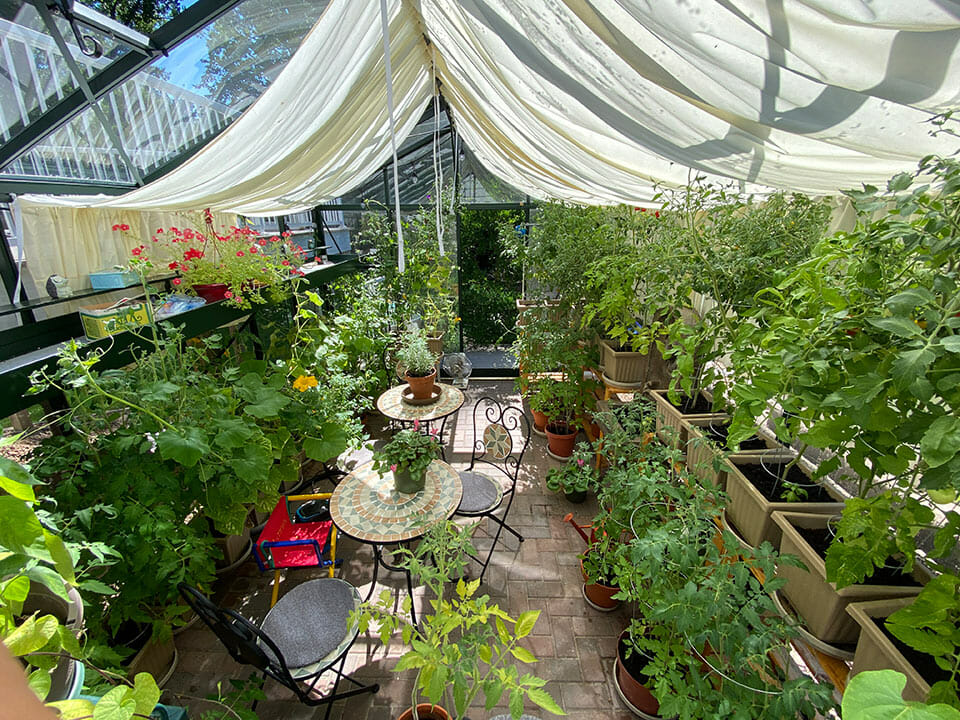 Glass greenhouse with windows open, plants on shelves, shade cloth installed